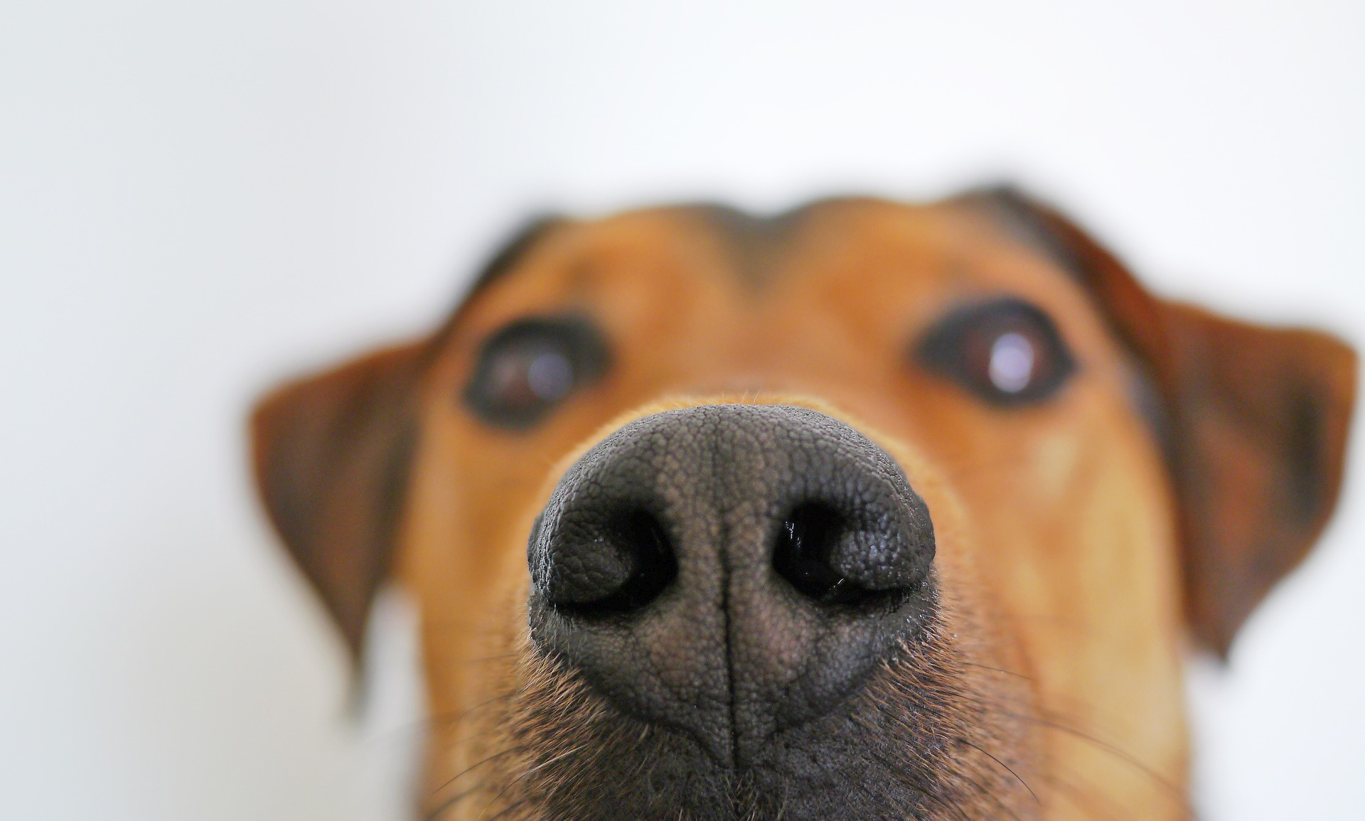 dog-838242_1920