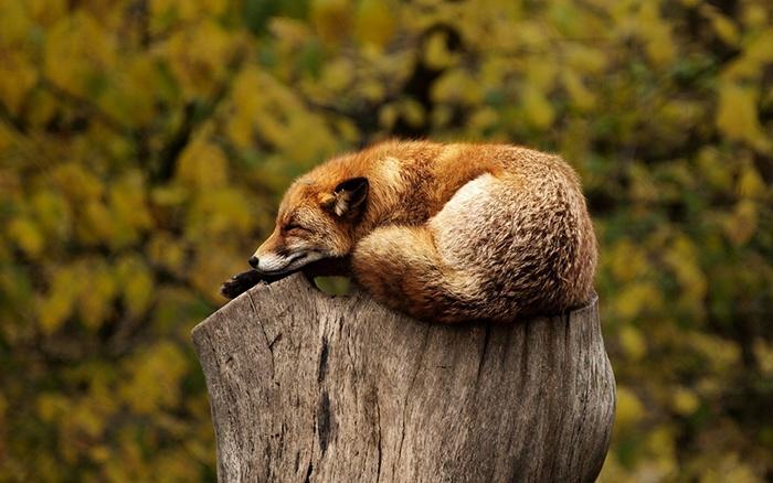 avoid-sleep-deprivation blog-pic.jpg